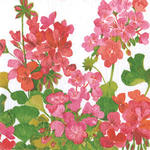 Geraniums Beverage Napkin